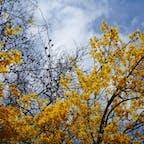 キプロス パフォスで見かけた名前不明の花