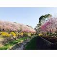 昭和記念公園 2018/3/31 #東京