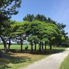 大型遊具や動物園、プールやゴーカート等もあって1日遊べる公園、テント張ってピクニック #福岡 #福岡市 #海の中道海浜公園 #公園 #2歳子連れ旅 2020.6月