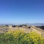 福岡市街から30分程の牧場 #福岡 #もーもーらんど #油山牧場 #三密回避 #大型遊具あり #観光 #2歳子連れ旅 2020.3月