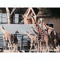 多摩動物公園 2020/2/7 #東京