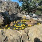 伊豆シャボテン公園 #伊豆#静岡
