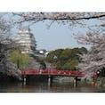 【兵庫県】 🏯姫路城 桜のピンクと姫路城の白が合う! #世界遺産 #日本百名城