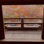 興聖寺の竜宮門  竜宮門から見る琴坂 細長い坂の形と横を流れる谷川のせせらぎが琴のように響くことから、琴坂と呼ばれる。 特に紅葉の名所となっている。  #京都 #神社仏閣 #サント芹沢鴨の写真