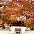 興聖寺の竜宮門 興聖寺は京都府宇治市に有ります。  総門の石門から琴坂を約200mダラダラ坂を上がると正面に竜宮門が有ります。  #京都 #神社仏閣 #サント船長の写真