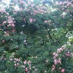 真夏のパレルモ(シチリア)で見かけた名前不明の花。 毎日寒いのであえて暑い時期の写真にしてみました。