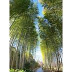 小径と言うだけあって、短いルートですが、真ん中には竹のベンチがあって、竹林を楽しめる場所です。