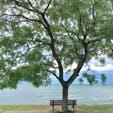 あのベンチ 彦根の琵琶湖湖畔にある、あのベンチの話を聞いたのは入院をして居る時、患者の談話室でした、私はその話を聞いて退院したら行くと決め、退院した次の日に、彦根の海岸とだけの情報で行きましたよ、オイラはミーハーですからね😰 海岸を走れば、直ぐ判りましたよ🤗  行きたいと思う方は、此の住所をナビに、滋賀県彦根市石寺町1331  #あのベンチ #サント芹沢鴨の写真