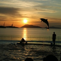 四国水族館🐬サンセットプログラム  夕陽の時間に合わせて素敵な景色と共に観れるイルカショーを開催してくれていました!
