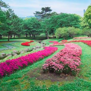5月中旬の別府公園♩