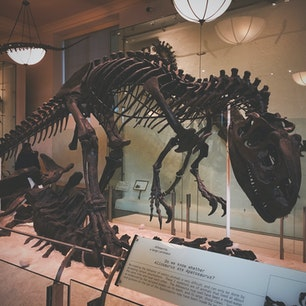 NY アメリカ自然史博物館🇺🇸 映画 ナイトミュージアムの舞台