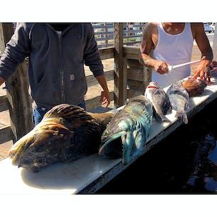 アヴィラビーチ(カリフォルニア)  早朝から船を出し、数時間で獲って来たと言う釣果を捌く地元青年たち。名前のよく分からない、見たことのない魚ばかり。  サンルイス・オビスポ港(Port San Luis)の桟橋にて。  1500年代に、スペイン人開拓移民がアメリカに上陸し、先住民チューマッシュ族に最初に出会ったのがこのベイエリアだそう。  19世紀頃までは、重要な貿易港として発展を遂げた。釣りやホエール・ウォッチングなどのレクリエーション、新鮮な魚介類が買える鮮魚店やレストランで人気。  #sanluisobispo #portsanluis #avilabeach #california