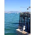 アヴィラビーチ(カリフォルニア)  サンルイス・オビスポ港から、歩いて10分ぐらいの桟橋の上にある、カジュアルなシーフード・レストラン、マーシーズ(Mersea's)。  180度オーシャン・ビューのテラス席で、のんびり食事ができる。ベジタリアン向けのメニューもあり。  食後は桟橋を散歩しながら、海面で遊ぶラッコ・ウォッチング。  #sanluisobispo #avilabeach #california #merseas