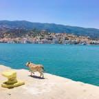 ギリシャ エーゲ海クルーズの時出会った犬