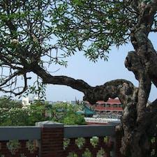 安平古堡 フランジパニの大木 いい香りが漂っていた