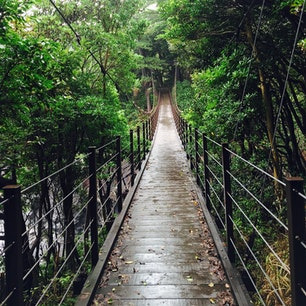 静岡県伊東市の橋立吊橋です