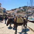 ギリシャ エーゲ海 イドラ島 この島は車の乗り入れが禁止されているため、移動は、徒歩かロバ^ ^