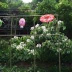 台湾 苗栗県三義に客家桐花祭を見に行った時の写真 勝興の旧駅舎から