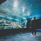 水族館って神秘的ですよね、、、  #沖縄