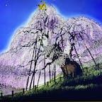 蒲鉾館のフロアいっぱいに影絵作家の藤城清治さんの作品が展示されていて見事でした。 無料でいいのかと思う位の作品の数々。 個人的には、この滝桜が好きですね。