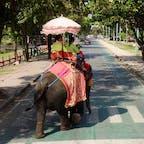 タイ アユタヤ近郊 横断歩道を渡る象さん