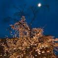 京都 京都府立医科大学 夜桜と月