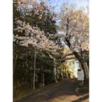 高石神社 2021/3/24 #神奈川