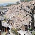 産寧坂の桜   #サント船長の写真 #サントの桜巡り #京都