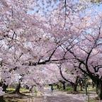 舞鶴公園(福岡)