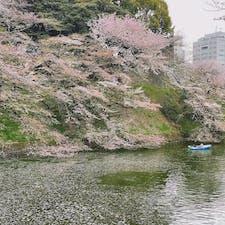 千代田区立 九段坂公園🌸  お花見しなくても桜を楽しめる✨ ボートがまた絵になる😳