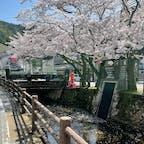これが城崎温泉で撮った桜の写真📷🍒