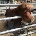 長野 佐久 スエトシ牧場 ザ・ホースマン笑のえだまめ🐴 ミニチュアホース可愛い♡ 馬や動物がたくさんいて、触れ合えます