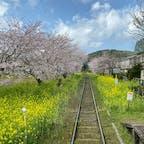 小湊鉄道に乗って来ました。