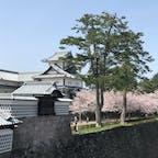 #石川県 #金沢 #金沢城 #満開の桜