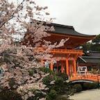 桜は7分咲きでした。