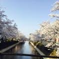 福島沿い桜並木
