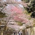 香川県金刀比羅宮 本宮へ続く道🌸
