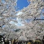 福岡県朝倉市 秋月城  3月末に秋月城跡の桜並木を見てきました。 曇りのち雨は有り難いことに外れ ぽかぽか陽気の晴天! 両側で綺麗に咲き誇る桜は とっても綺麗で、 荒んだ心を少しだけ落ち着かせてくれました。  この近くにある月の峠というパン屋さんにも立ち寄り、 お昼過ぎに到着したらすでに列が… 駐車場も満車状態でした。 一番人気のカレーパンや他にもいくつか買って 大人しく車の中で頂きました。 中のカレーだけでも販売してほしいくらい 定番受けする食べやすいカレー!  コロナ対策で店内には二組・最小限の人数となってました。