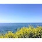 ゴリータ(カリフォルニア)  碧い海と菜の花のコントラストが爽やかな、セントラル・コーストの春の景色。  1号線のアロヨ・ホンド・ビスタ・ポイント(Arroyo Hondo Vista Point)からの眺め。  #goleta #california #canolaflower