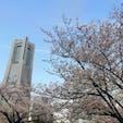 いつかの桜、いつかの横浜。  #Yokohama#横浜#桜木町#みなとみらい#桜#Sakura#ランドマークタワー#🌸