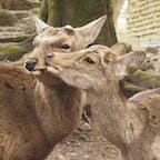 #奈良公園 #鹿 #奈良県