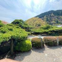 善峯寺 天然記念物 遊龍の松  #サント船長の写真 #京都