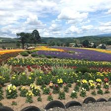 北海道 美瑛 ぜるぶの丘 ラベンダーなどの花々の周りをバギーで一周できます