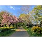 砧公園は思いのほか広かった!春は園内の花が綺麗に咲いています。  #東京 #東京の公園