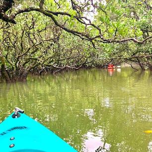 奄美大島、黒潮の森マングローブパークのカヌーツアー  #マングローブ #奄美大島 #鹿児島県