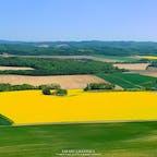 毎年5月中旬から6月上旬にかけて、丘一面の菜の花畑が町を黄色く染める北海道安平(あびら)町。周囲に広がる牧場や田園風景はのどかな雰囲気で、ドローンで空撮するとその美しさがよくわかります。#北海道 #安平町 #菜の花畑