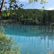 美瑛 白金の青い池 キレイなエメラルドグリーンです