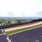 富良野 ファーム富田 壮大な敷地にラベンダーの花々が広がっています
