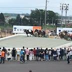 帯広 ばんえい競馬場 重いソリをひく巨大な馬たち 並列しながら応援するのが楽しい!