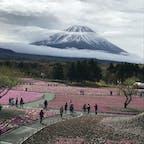 富士芝桜まつり 晴れていれば富士山と芝桜のコラボが見れます 曇りだったけど一瞬富士山見れました